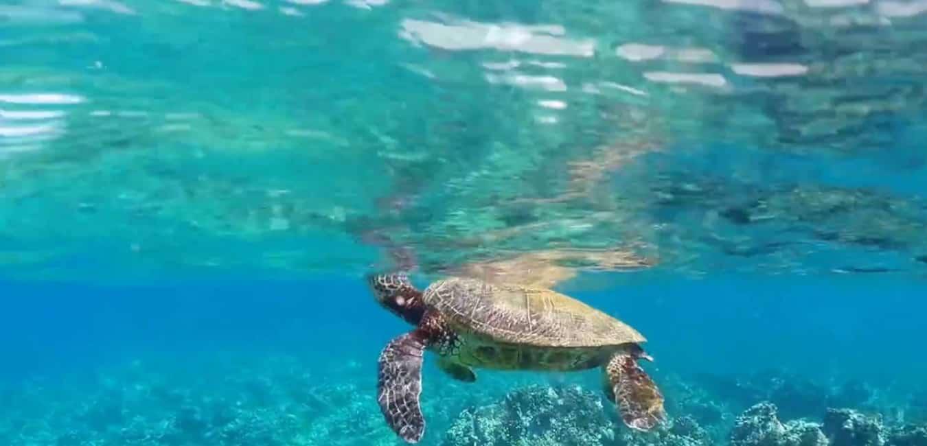 ulua beach snorkeling