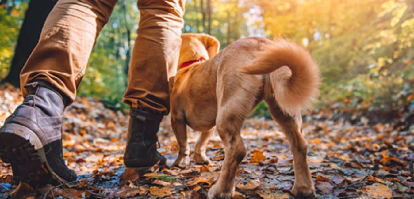 Activities you can do with Dogs in Big Sur