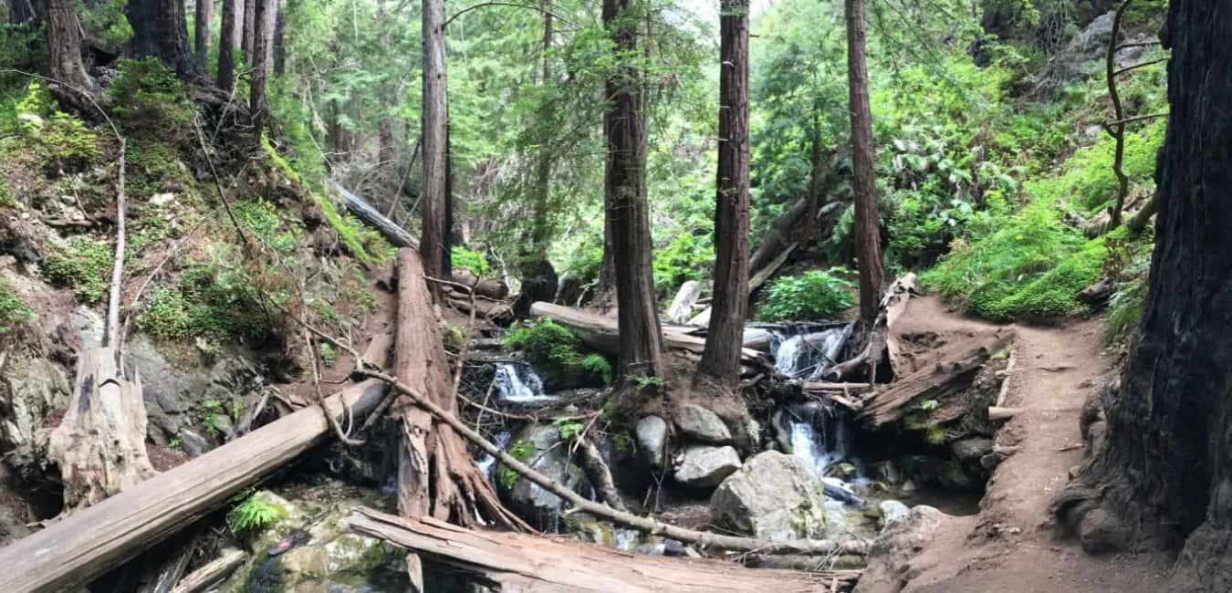 Best Campgrounds in Big Sur - Limekiln Trails
