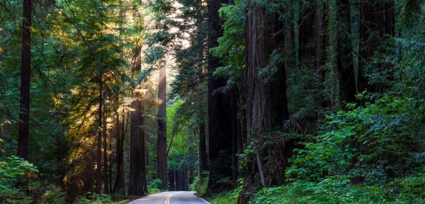 Best Glamping in Big Sur - Redwood Highway