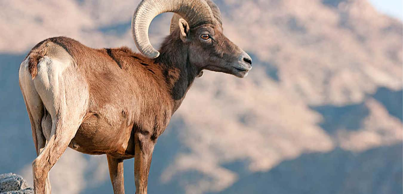 Death Valley Facts about Animals