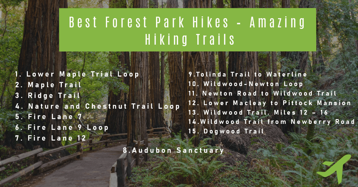 Best Forest Park Hikes – Amazing Hiking Trails