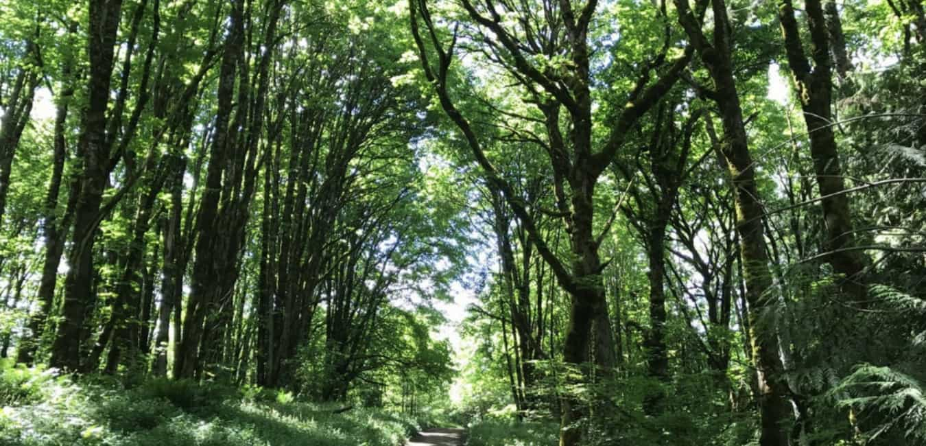 Forest Park Firelane 7 Hike