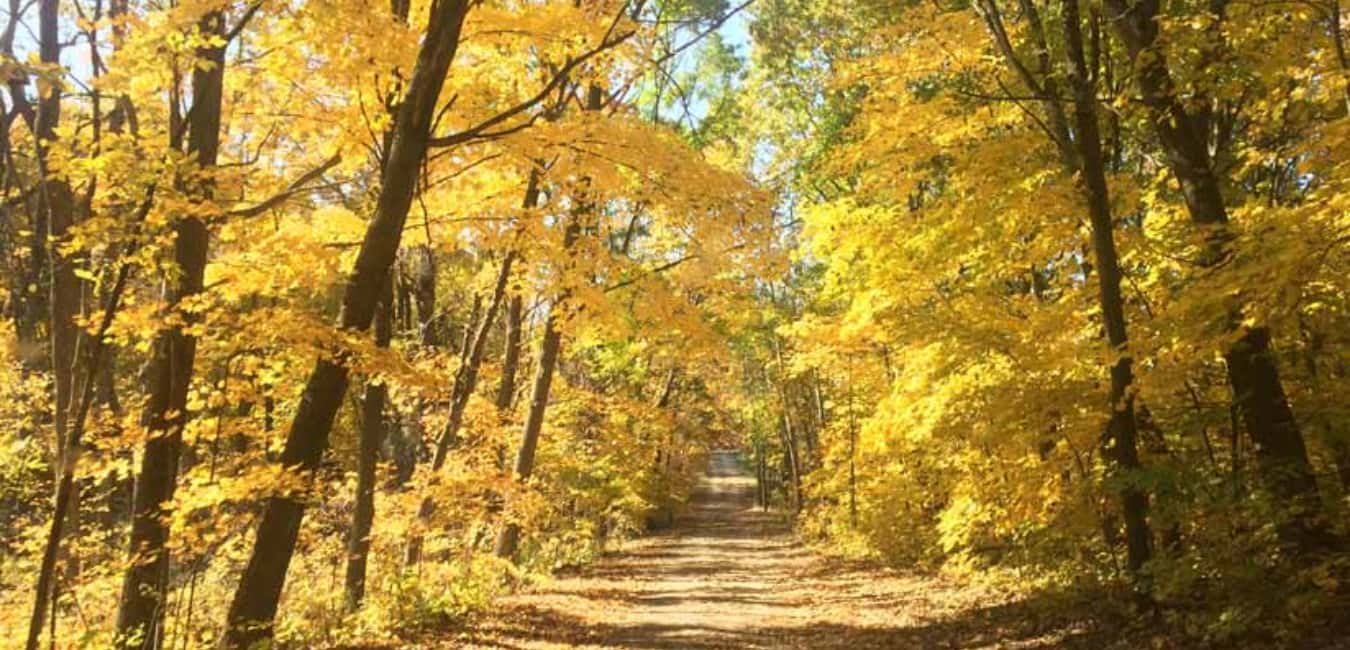 Forest Park Hikes - Maple Trail
