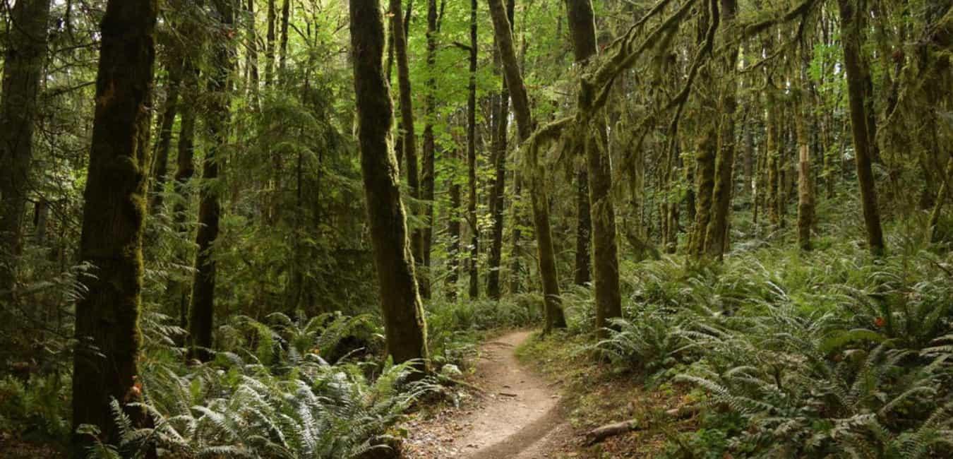 Forest Park - Wildwood-Newton Loop
