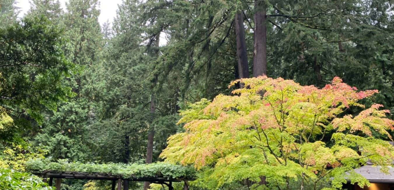 Portland Japanese Garden – Price for the Entry/Admission Fee