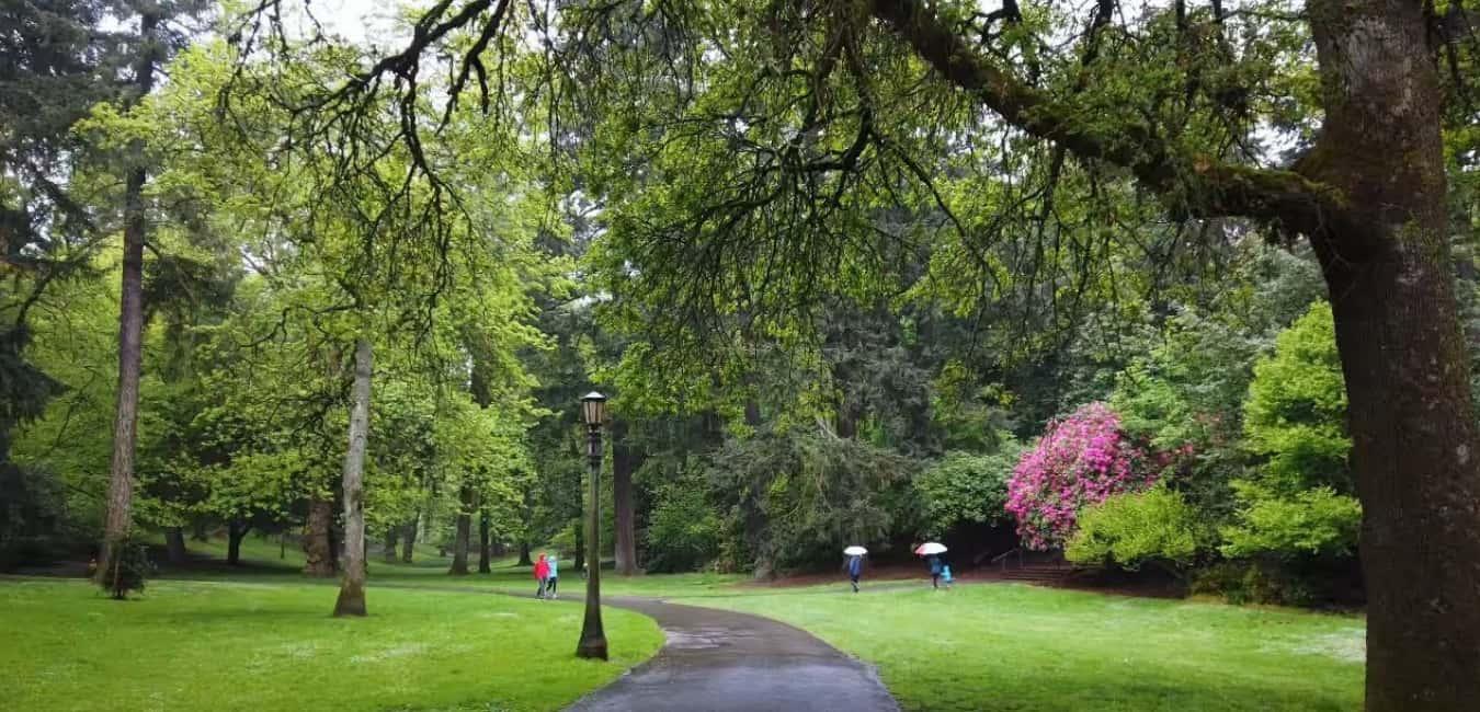 Portland Lockdown Walk - Laurelhurst Park portland oregon