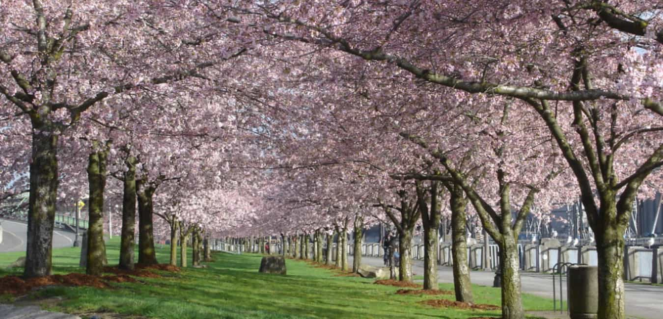 Tom McCall Waterfront Park, Portland Oregon